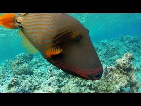 Maldives 2013 La barrière de corail - Embudu