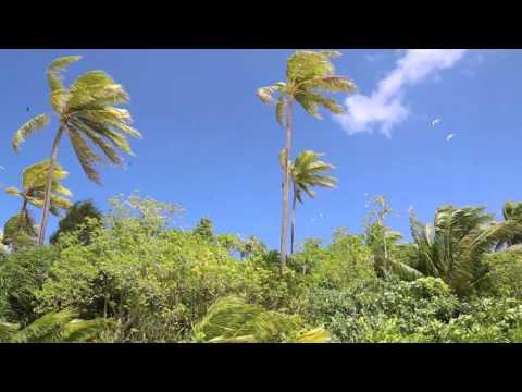 Tuvalu Funafuti conservation area Ile paradisiaque Fualupa / Tuvalu Fualupa island