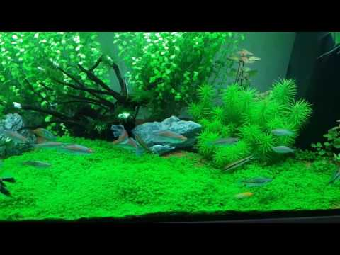 How To Make Ro Water Good For Use In  Planted  Tank
