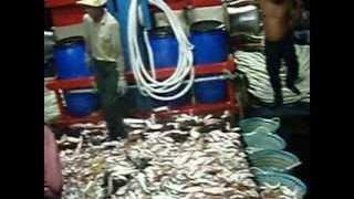 kapal bot pukat tunda ikan rh fishery.. hutan melintang perak.. part 3