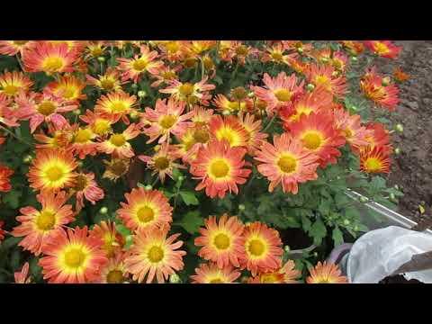 видео: 03 10 17г  Пробежка по саду  Осенние краски
