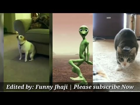 Dame Tu Cosita Challenge | Alien vs Cat vs Dog Funny Dance