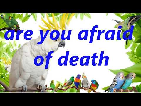 """""""are you adraid of death"""" Teach your bird to say human sound record parrot budgie talking training"""