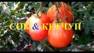 Как сделать томатный сок и кетчуп