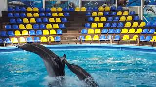 Дельфинарий. dolphinarium.