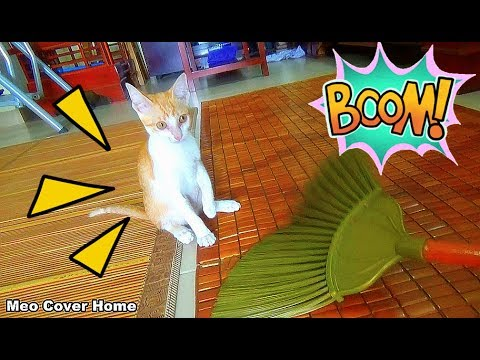 Cat Fighting With The Broom So Crazy And Funny | Funny Cat Vines 2017 | Meo Cover Home