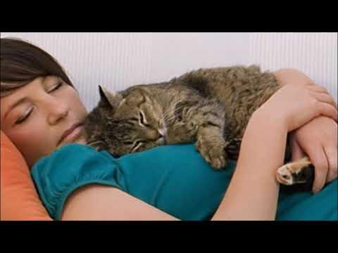 Вопрос: Почему кот уходит, если пошевелиться, когда он лежит рядом?