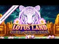 Sycuan 🎰 Lotus Land Tiger's Winnings Jackpot Stream Feature 🐯 The Slot Cats 🎰😺😸