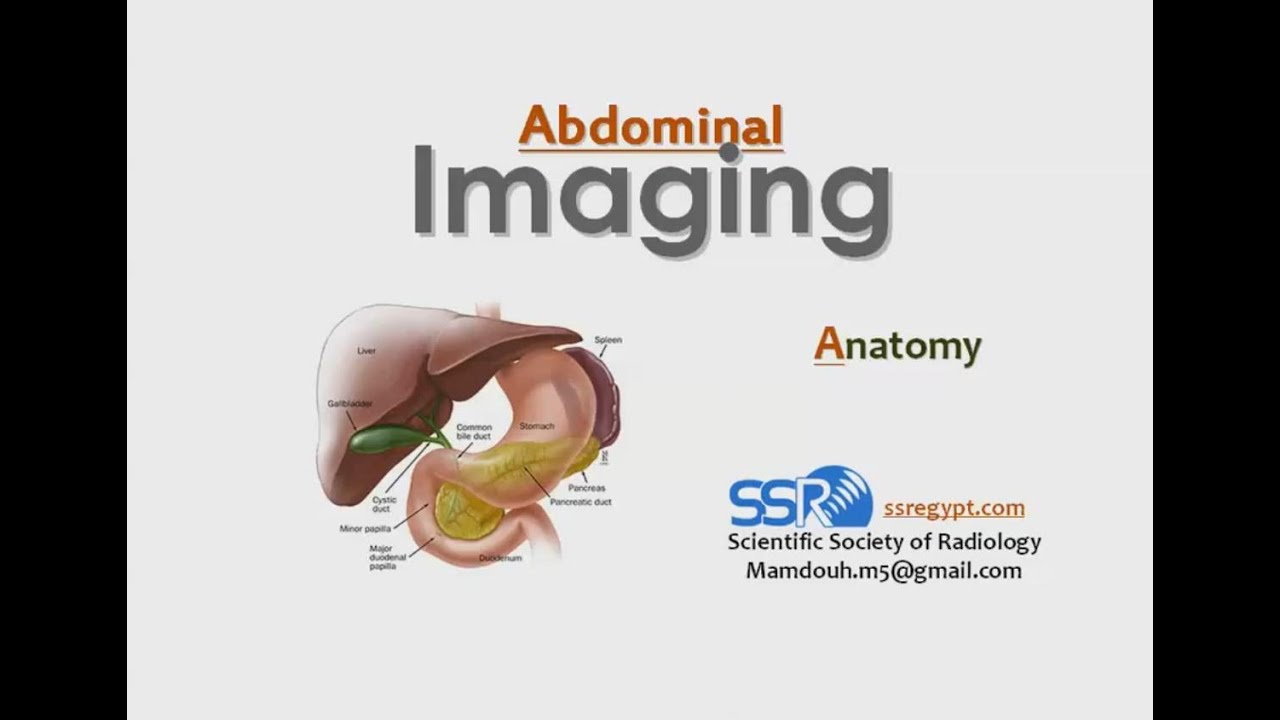 Radiological Anatomy Of Gastrointestinal Tract - Prof. Dr. Mamdouh ...