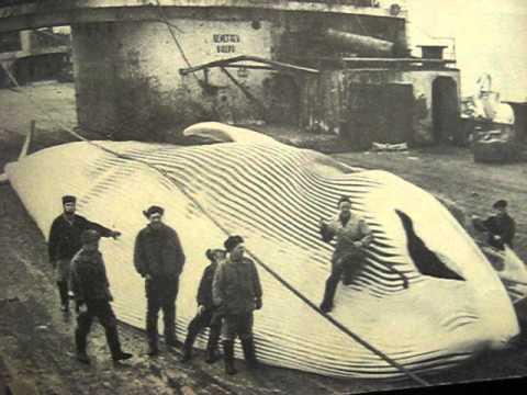 фото полосатик кит