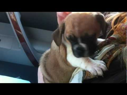 The Kids Meet Our New Puggle Dog Brody And Are Surprised