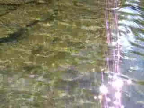 Fly fishing west virginia wild rainbow trout catch youtube for West virginia out of state fishing license