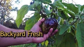 Vegetable Garden Dinner Idea - Eggplant Antipasto Preserve How to Recipe