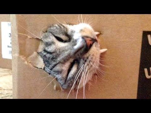 Thumbnail: Your LAUGH OF THE DAY - Super FUNNY ANIMAL compilation