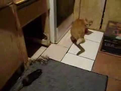 παίζοντας με τη γάτα και το ποντίκι νόμιμη ηλικία dating στην Ιντιάνα