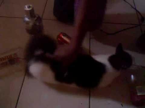 horny kitty