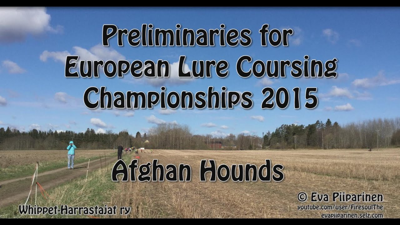 Lure Coursing Preliminaries for European Championships ... Afghan Hound Lure Coursing