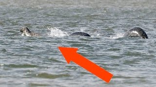 Photographer Takes Clearest Photo Ever of Loch Ness Monster