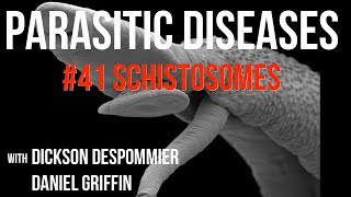 Parasitic Diseases Lectures #41: Schistosomes