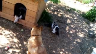 Кошки и собаки - дружба!