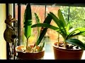 74 Orchid Update From The Grow Room - warning : indecently long video