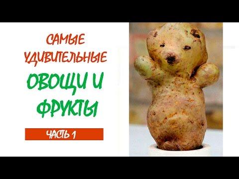 Причудливые овощи и фрукты, 27 смешных фото приколов