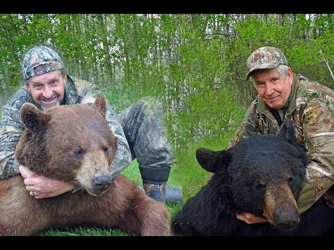Manitoba Bear Hunt- (2) 400lb+ Bears
