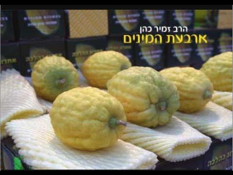 ארבעת המינים הרב זמיר כהן
