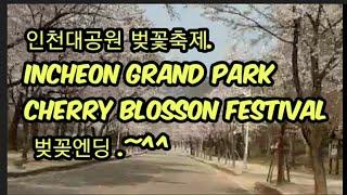 인천대공원 벚꽃축제,Incheon Grand park …
