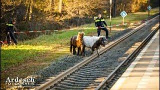 Politie uren lang druk met twee loslopende pony's op spoor bij Ommen - Persfotograaf GoPro POV