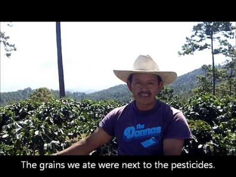 Smallholder coffee farmer from Honduras talks about Fair Trade