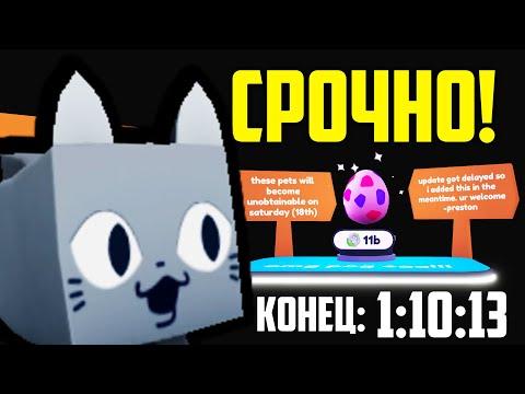 СЕКРЕТНЫЙ Способ Как Получить Pog Cat в Пет Симулятор Х | Pet Simulator X
