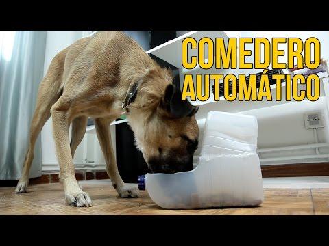 9643fb32dbd8 Cómo hacer un comedero automático para perros (Experimentos Caseros) -  YouTube