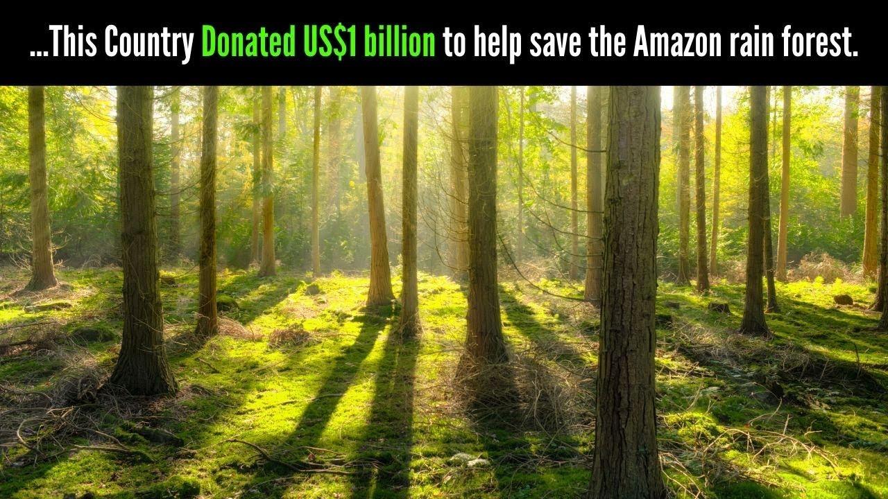 amazon rainforest facts - 1280×720
