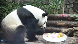 Giant panda enjoys the summer