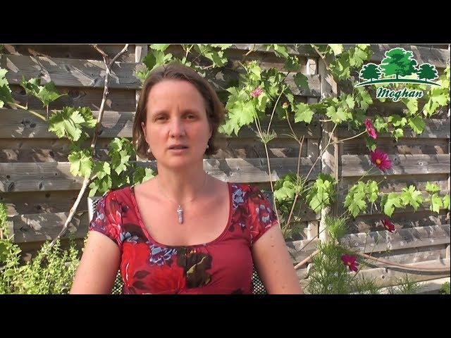 Mieke Stessens - Inleiding Moghan vzw