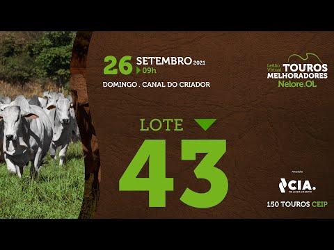 LOTE 43 - LEILÃO VIRTUAL DE TOUROS 2021 NELORE OL - CEIP