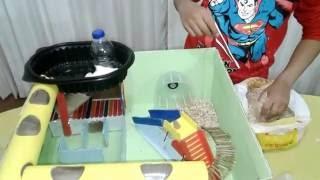 Casa Recreativa para Hamster