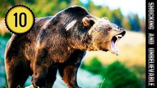 видео Самый большой медведь в мире – 1000 кг | Самый большой в мире медведь