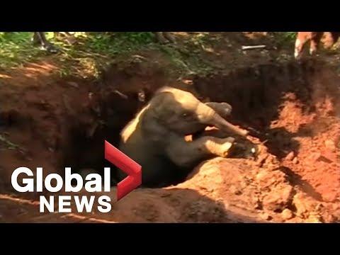 Kevin & Liz - Feel Good Files - Baby Elephants Rescued