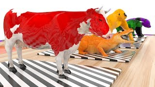 Learn Colors with King Kong Cow and More Animals For Kids #t Colours Animals For Children