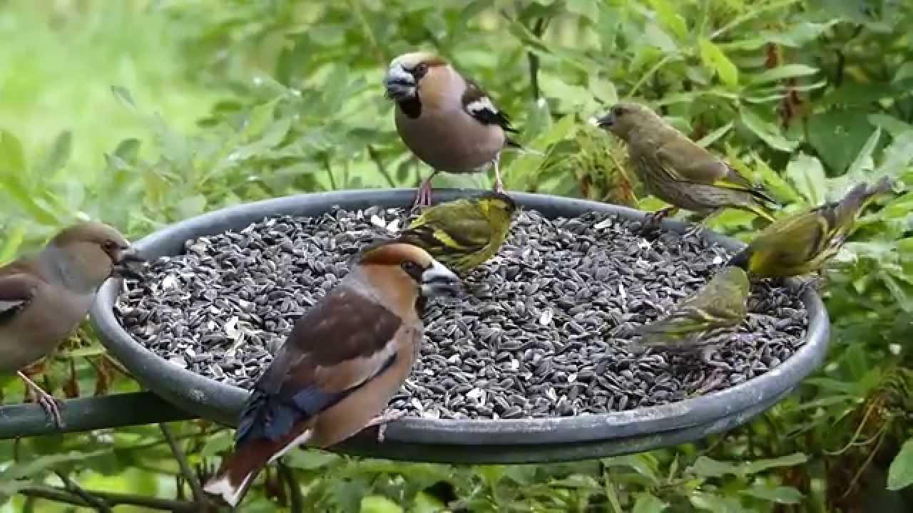 Ptci na krmtku Birds feeding on Bird Table - YouTube