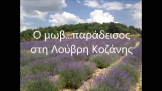 Λεβάντα : Ο μωβ παράδεισος στη Λούβρη Κοζάνης