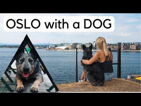 Norway Travel Guide // Oslo - Sightseeing with Your Dog