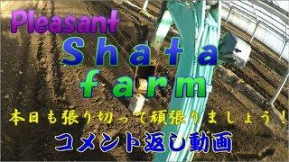 どうも!シャタ農園のシャタ2号です! 昨日の動画うp後に間違えに気付...
