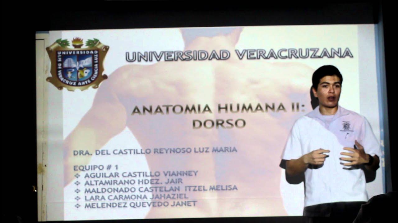 UV Anatomia II exposición equipo 1 Dorso (parte1) - YouTube