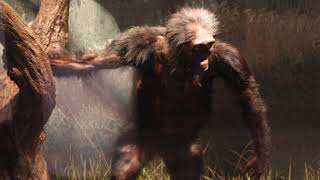 New Findings on The Mysterious Early Hominids That Came Before