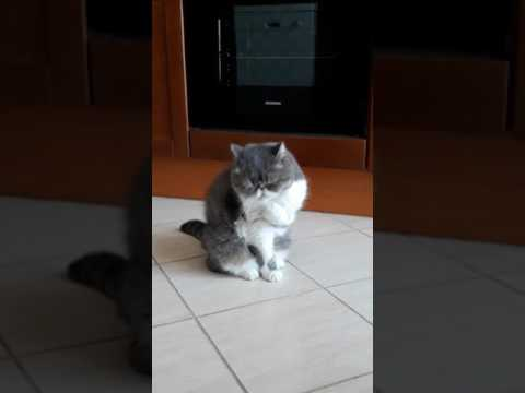 Cat clean his own face