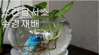 수경재배 물고기로..#스킨답서스#베타