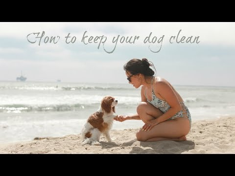 HOW TO CLEAN YOUR DOGS AFTER THE BEACH